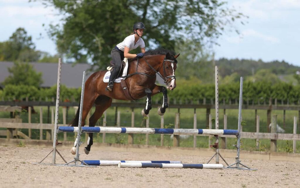 A small Guide to Handle Horse Jumping